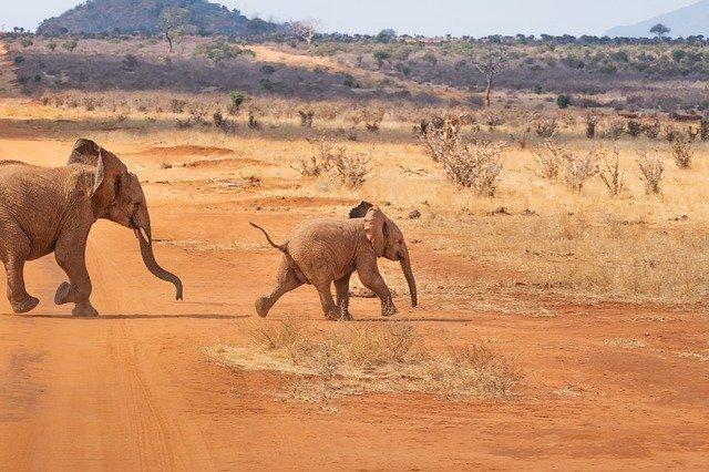 L'essentiel pour des vacances de rêve en Afrique